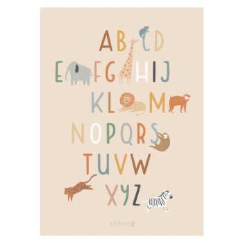Sebra poster wildlife