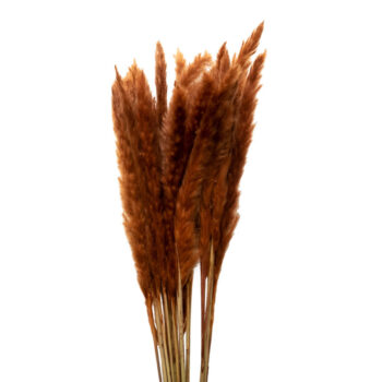 pampas grass brown